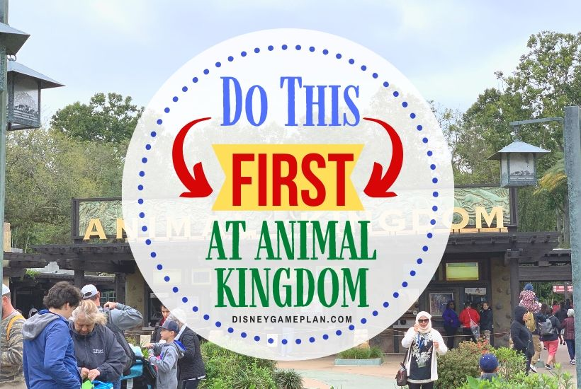 Disney's Animal Kingdom Tips: What To Do When You First Arrive